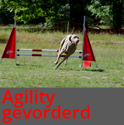 agility_gevorderd.png